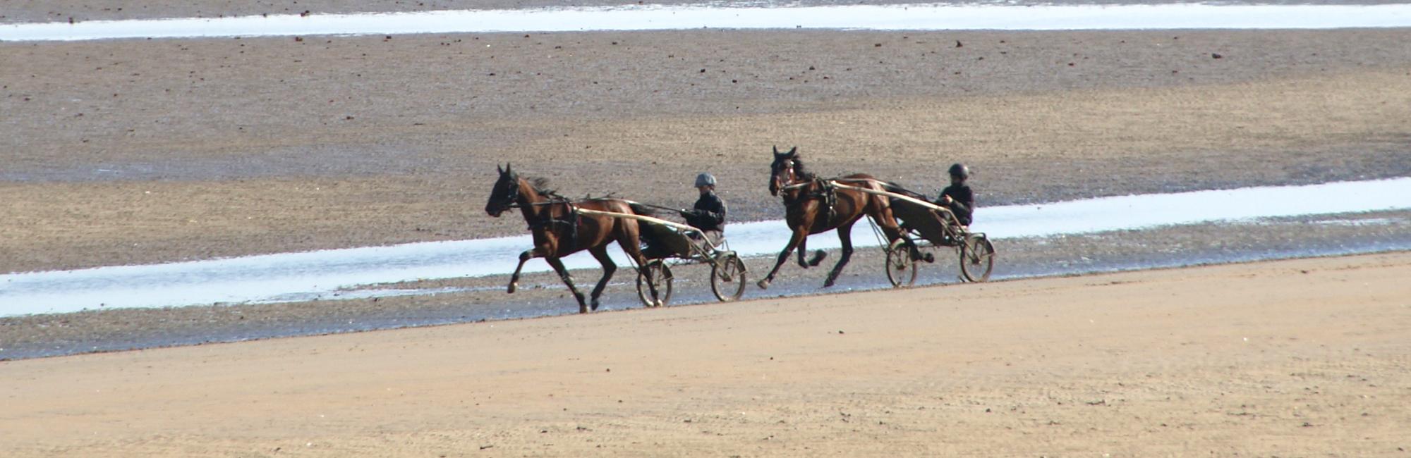 Sainte Marie du Mont chevaux sur la plage